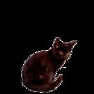 黒猫クロコップ氏「これで人間辞めました」