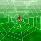 手長の蜘蛛