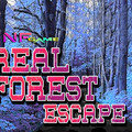 Real Forest Escapeのイメージ