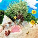 砂の星 島