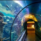 Knf Escape From Sea Aquarium