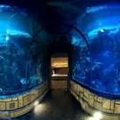 Knf Escape From Sea Aquarium