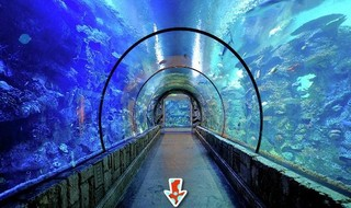 Knf Escape From Sea Aquariumのゲーム画面「Knf Escape From Sea Aquarium」