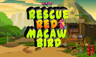 Knf Rescue Red Macaw Birdのゲーム画面「Knf Rescue Red Macaw Bird」
