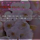 目の前に「春」が出現!?